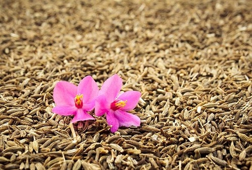 How is cumin beneficial for weight loss?