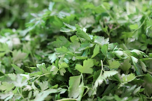 benefits of coriander and mint