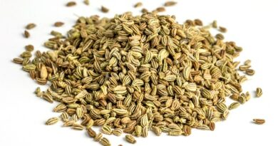 This image is about Carom seeds ,Trachyspermum ammi ,ajwain,nankwah,